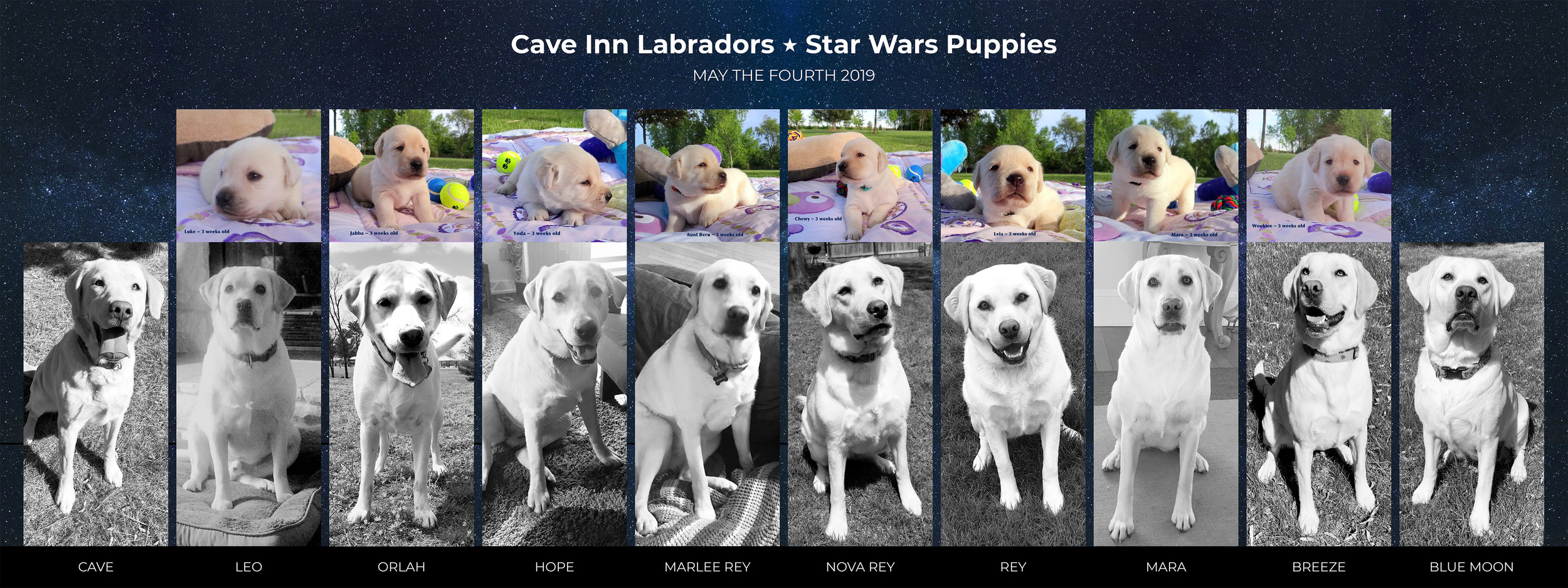 Cave Inn Star Wars Puppies.jpg
