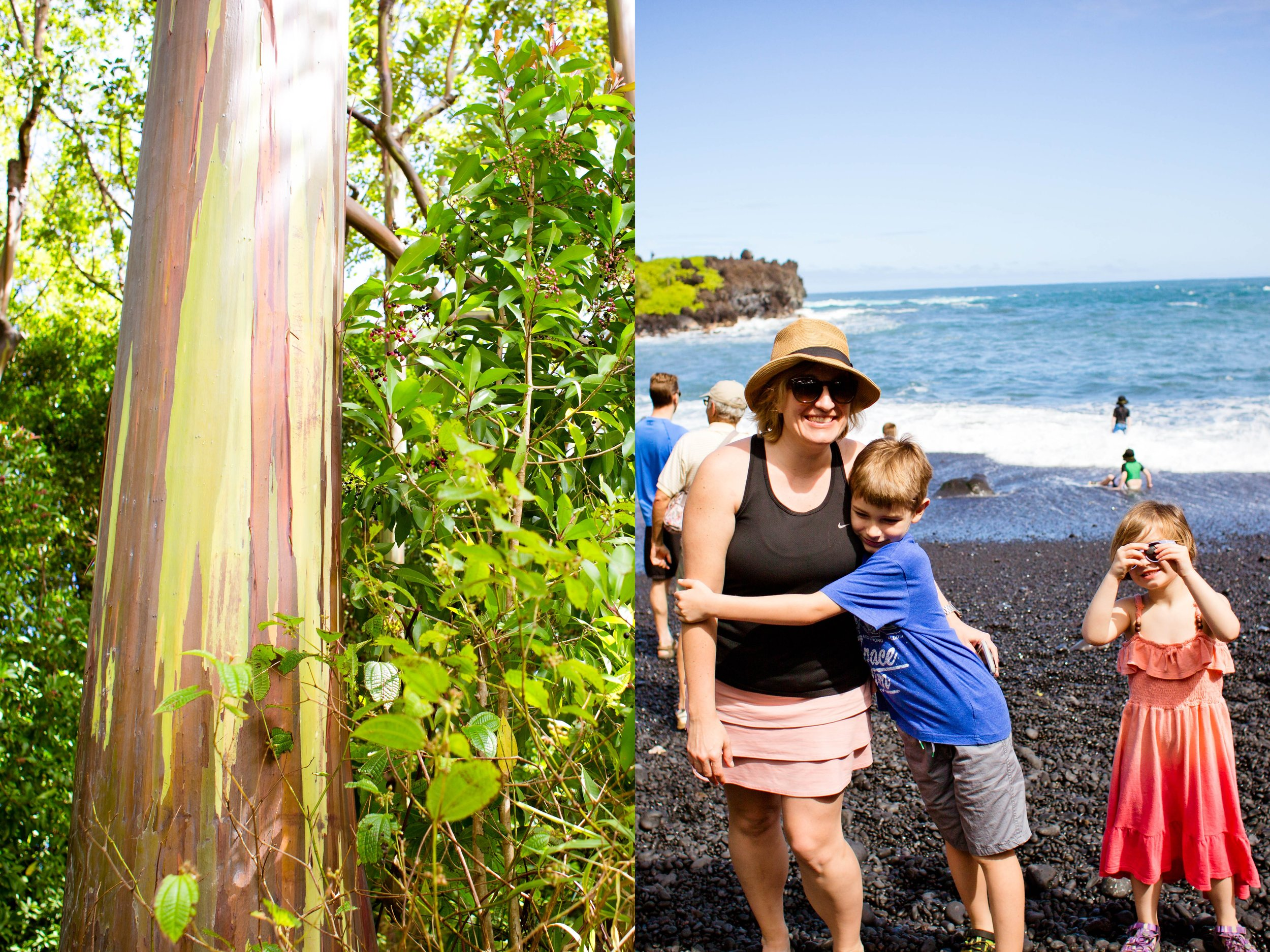 Rainbow eucalyptus and black sand beach on the Road to Hana.