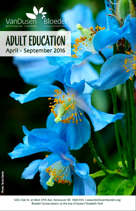 Brochure:  Adult Education for the VBGA