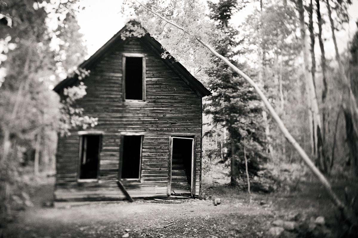 03_House_tree_8471_lowres.jpg