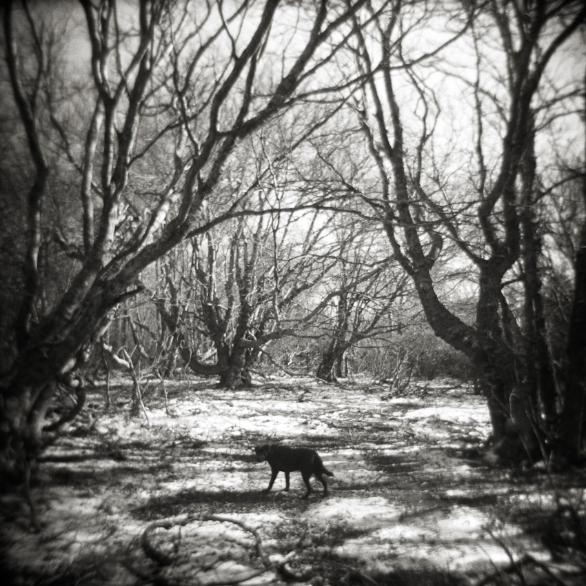 16_doginwoods_WIP1.jpg