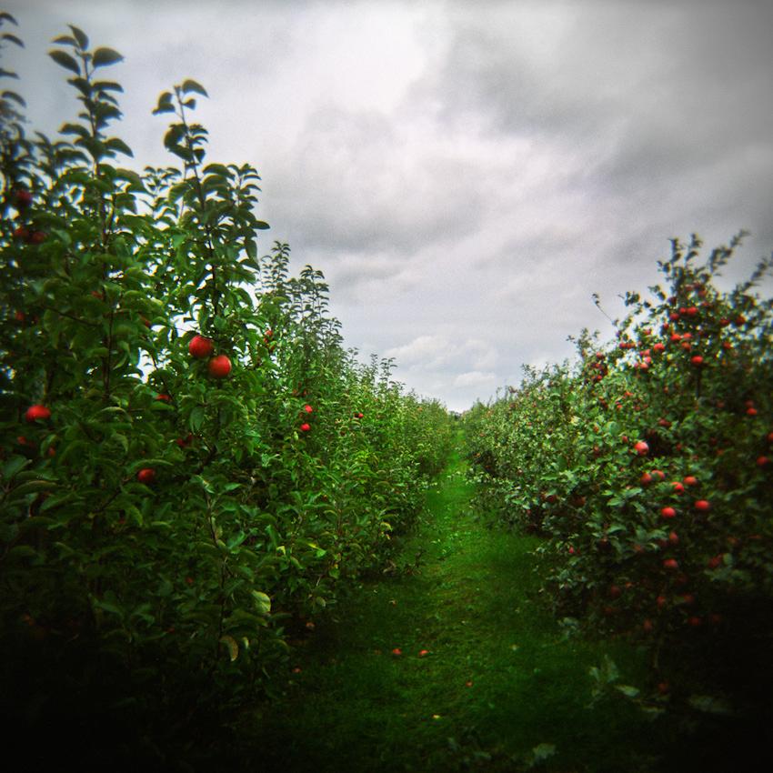 27_orchard_WIP2_lowres.jpg