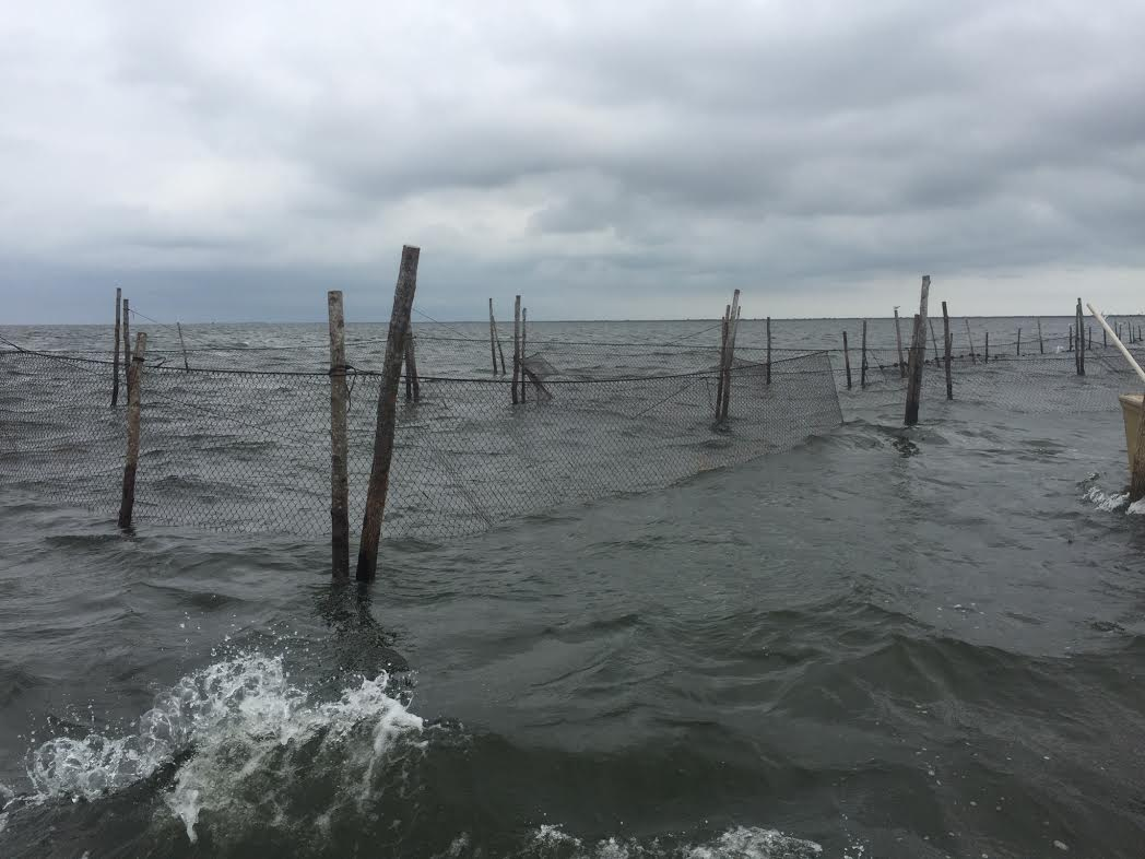 Willis Family Gill Nets in the Atlantic Ocean near the cape lookout national seashore.