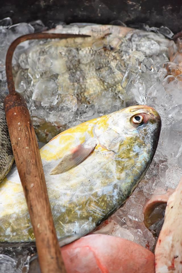 Fresh Pomfret- Eddie Willis & Mr. Big Seafood Harkers Island, NC