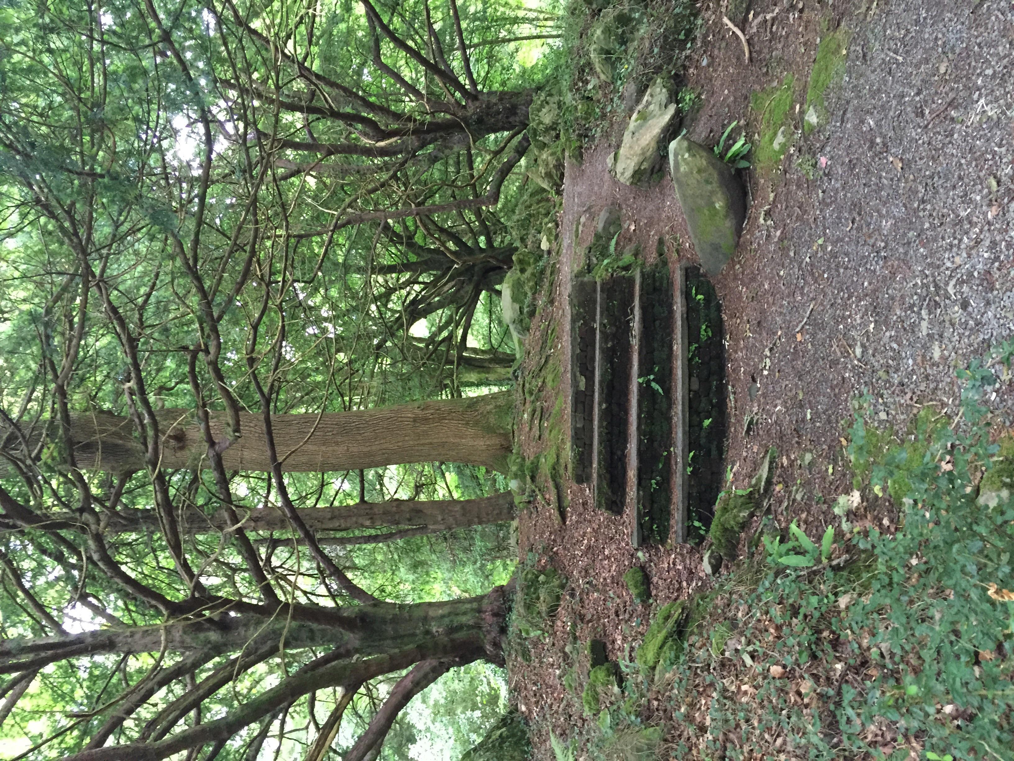 The arboretum in Muckross House gardens.
