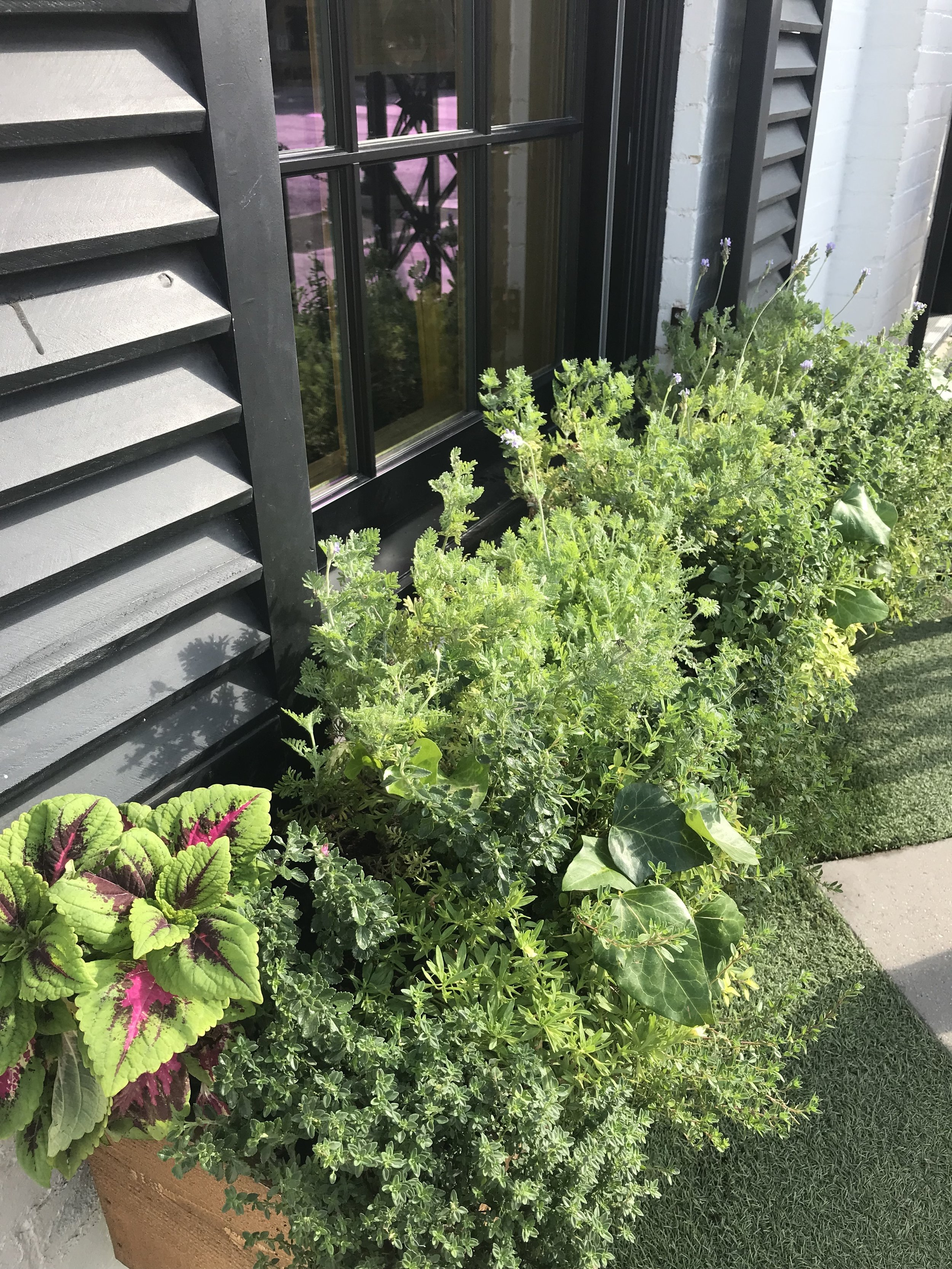 Lovely window boxes outside of the bakery.