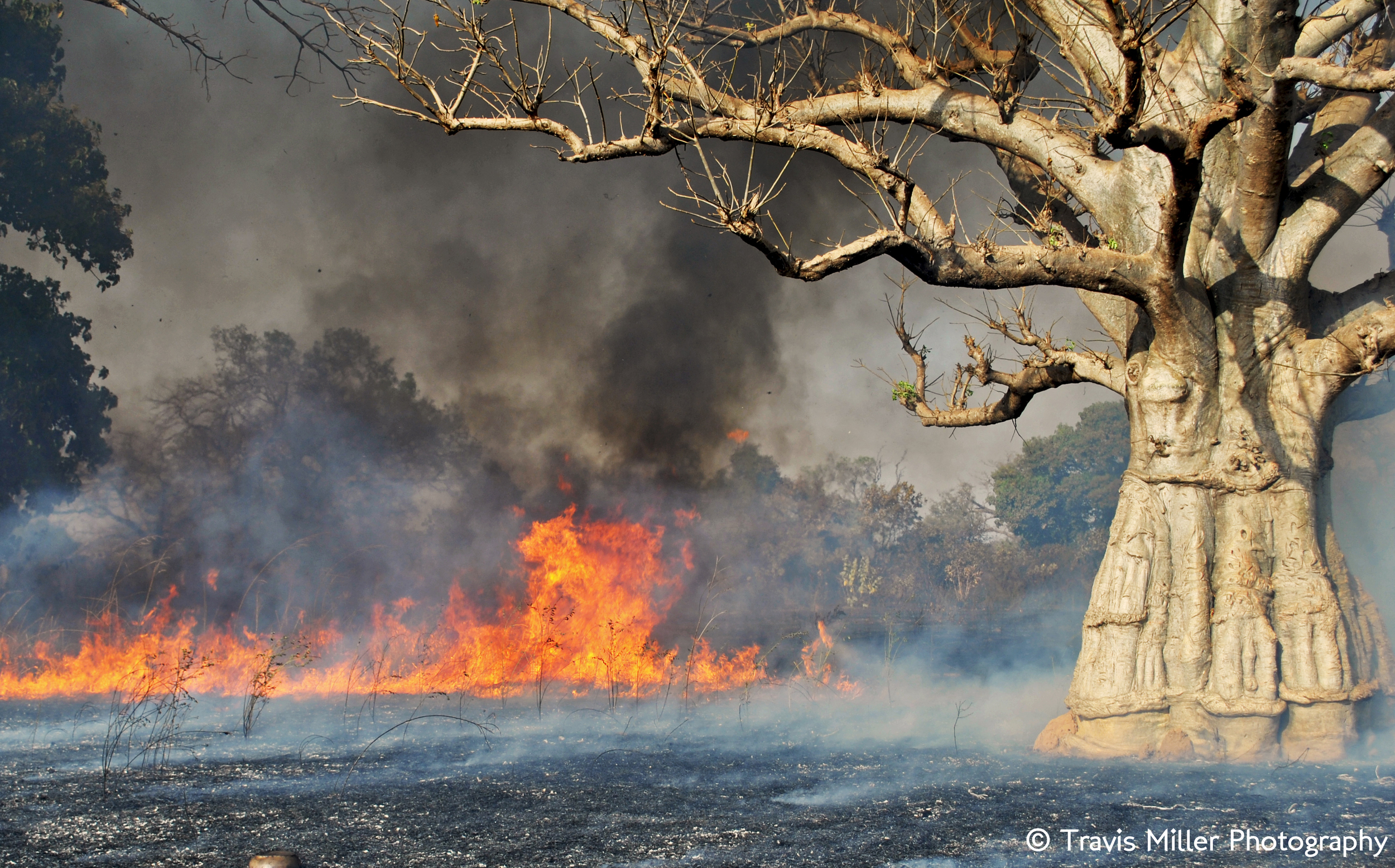 The Bush Ablaze    Si Kunda, The Gambia