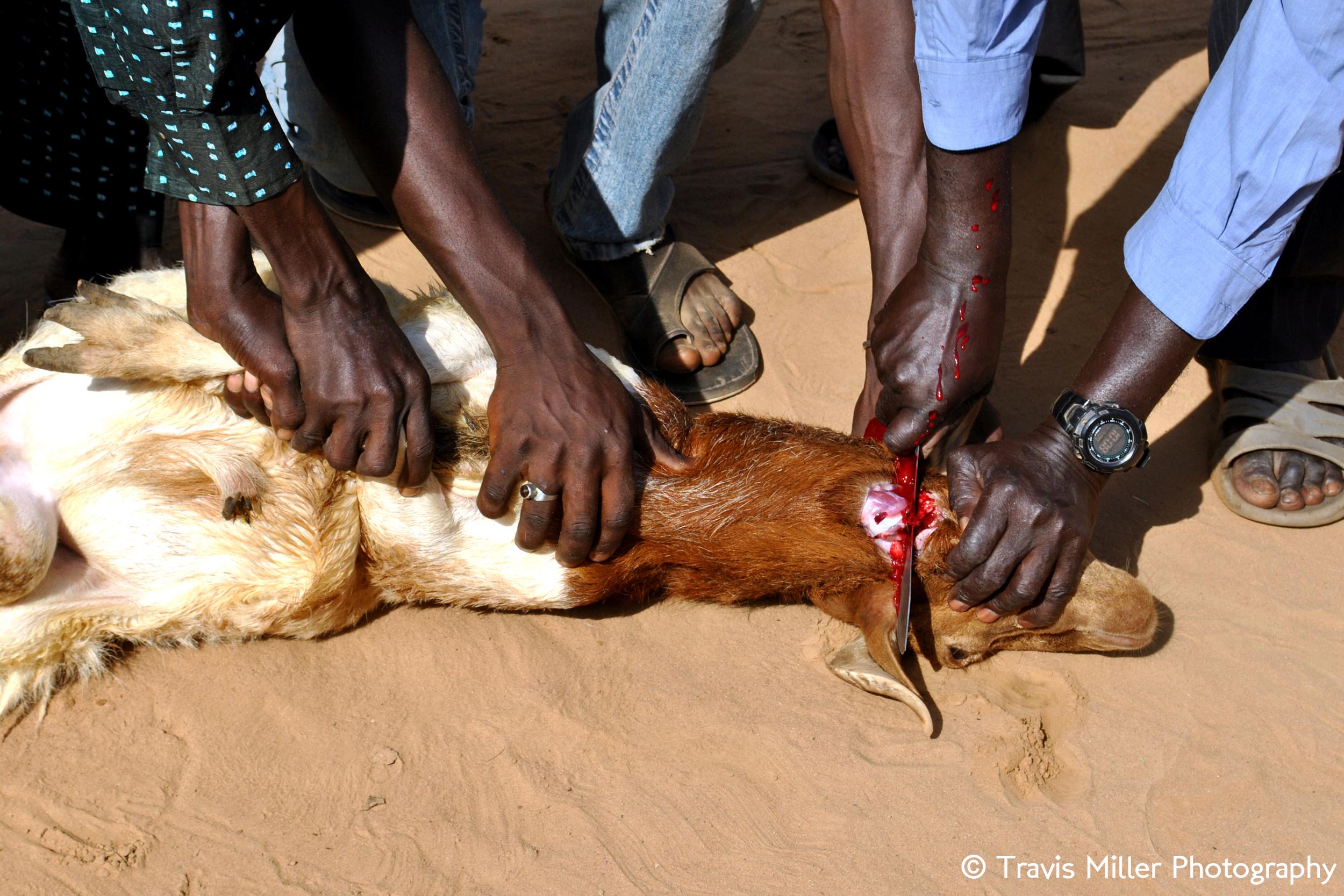 Tobaski Slaughter    Si Kunda, The Gambia