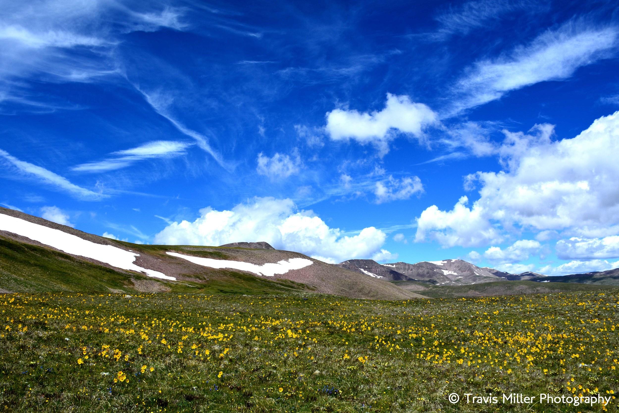 Summertime /  La Garita Wilderness Area, CO