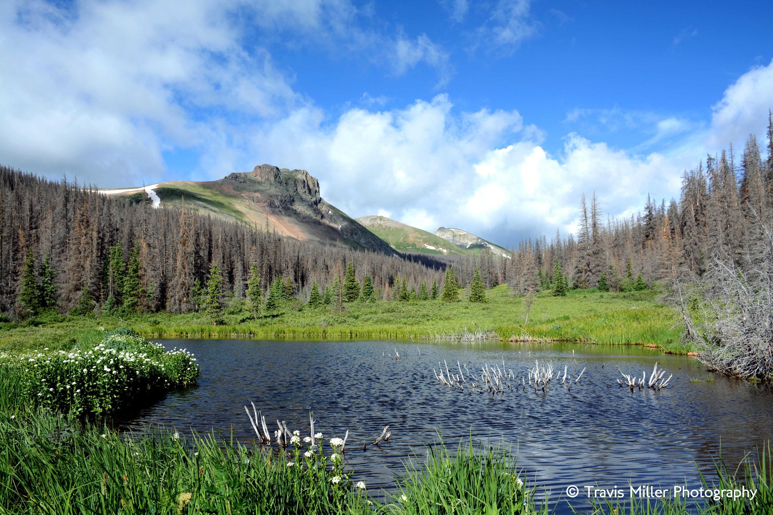 A Beaver's Pond /     La Garita Wilderness Area, CO