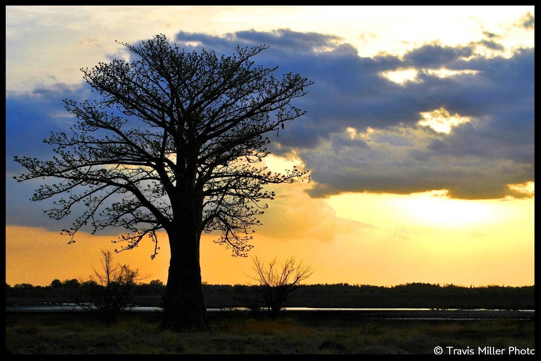 Gam001-Baobab Sunset.jpg
