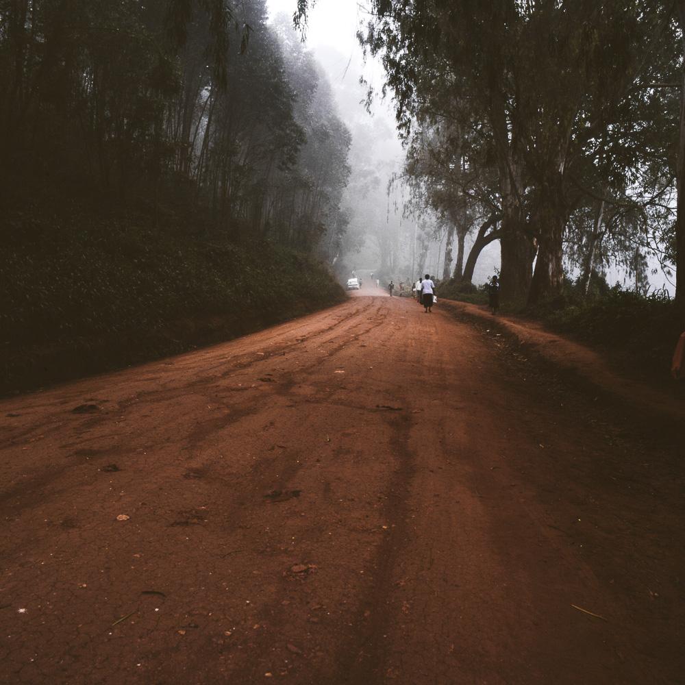 morningwalk-7.jpg