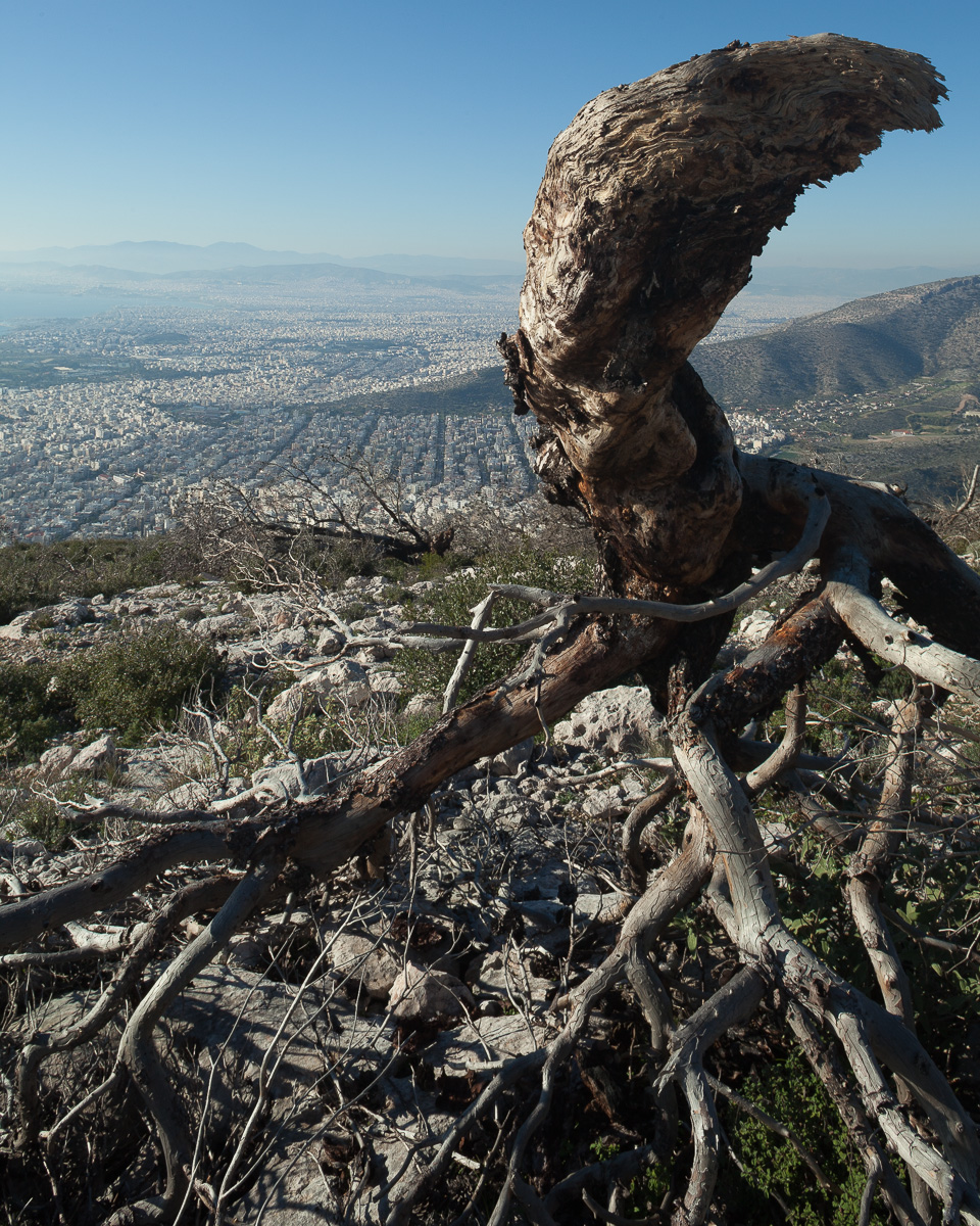 In 2015, forest fires swept through the lower slopes of Hymettus. Land at the edge of the city is often burned in order to clear the way for development. In the dry, hot summers, these fires often get out control. View looking northwest from Mt. Hymettus.
