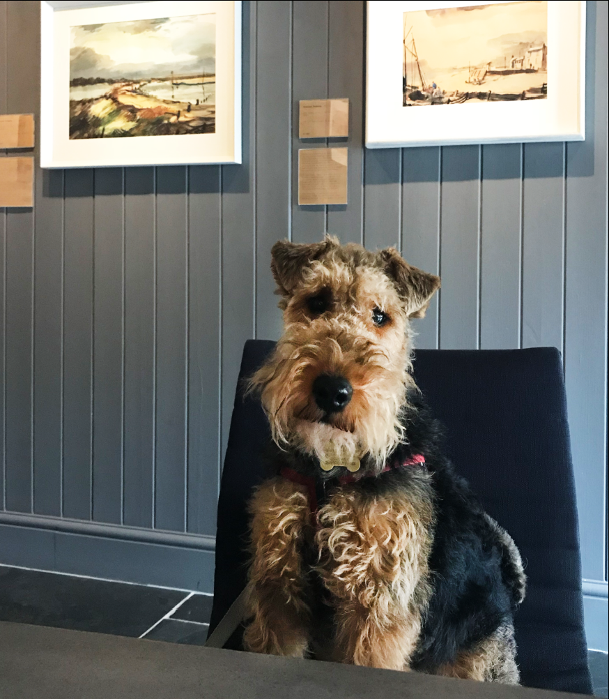 Stanley, the Head of Security, Welsh Terrier