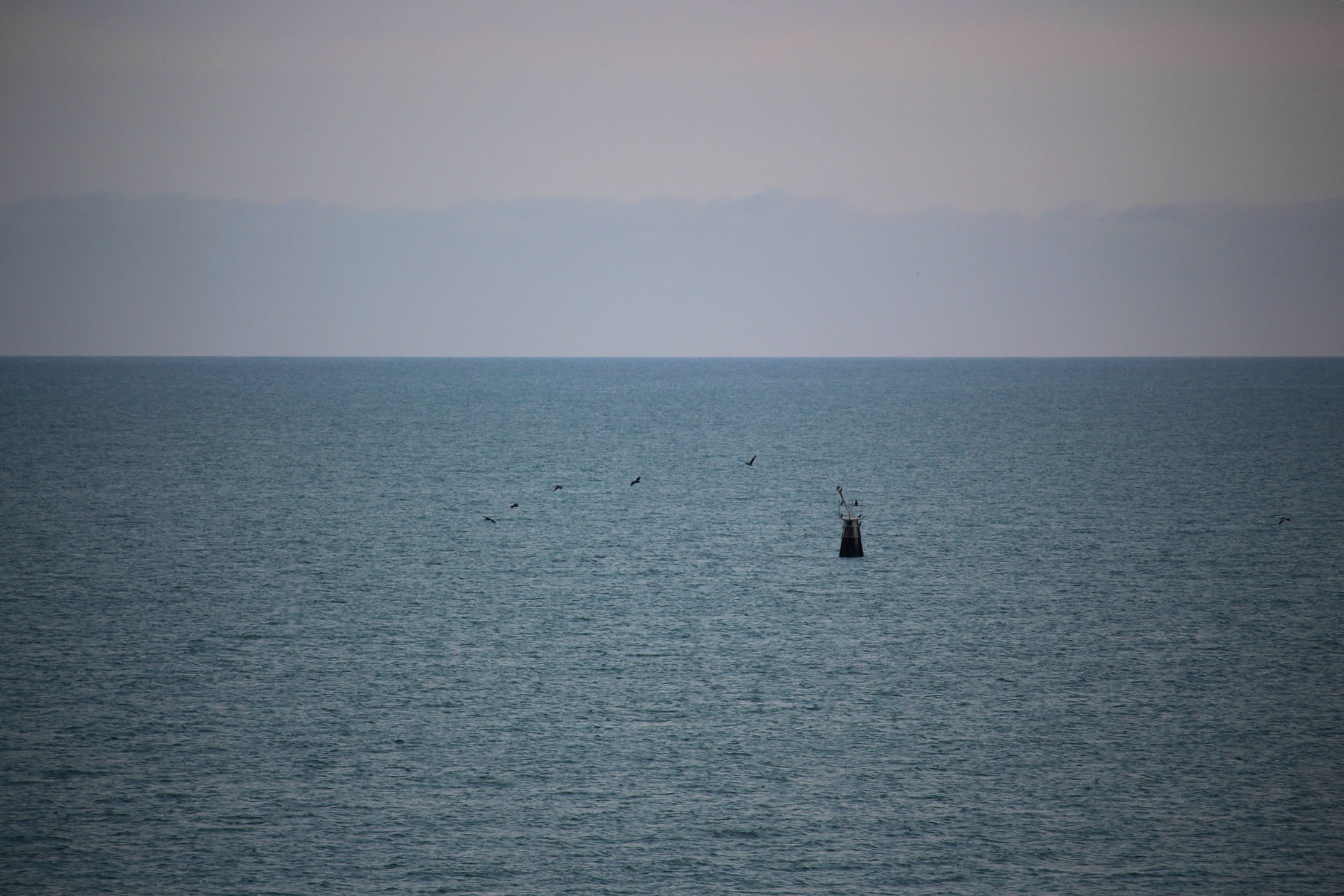 I looked out on our balcony one evening and saw these beautiful birds flying around a buoy.