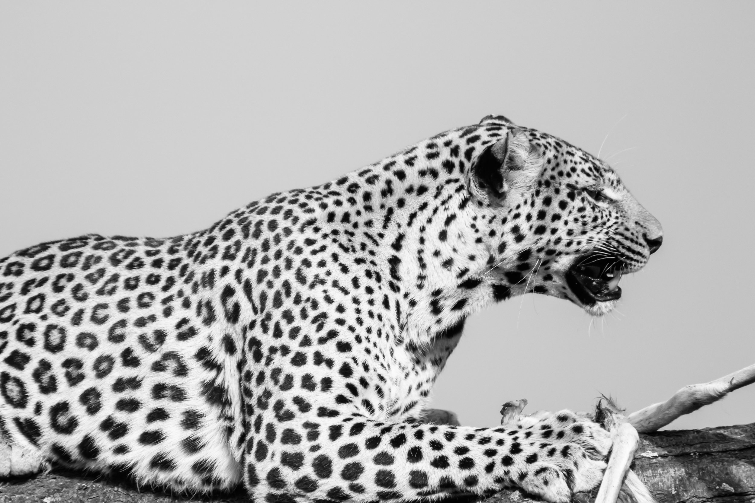 Animals_Website_Maxblakesberg-19.jpg