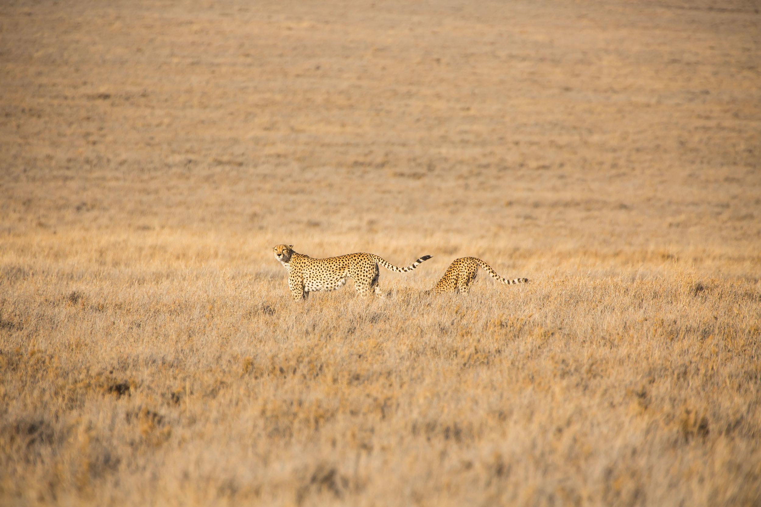 Animals_Website_Maxblakesberg-13.jpg