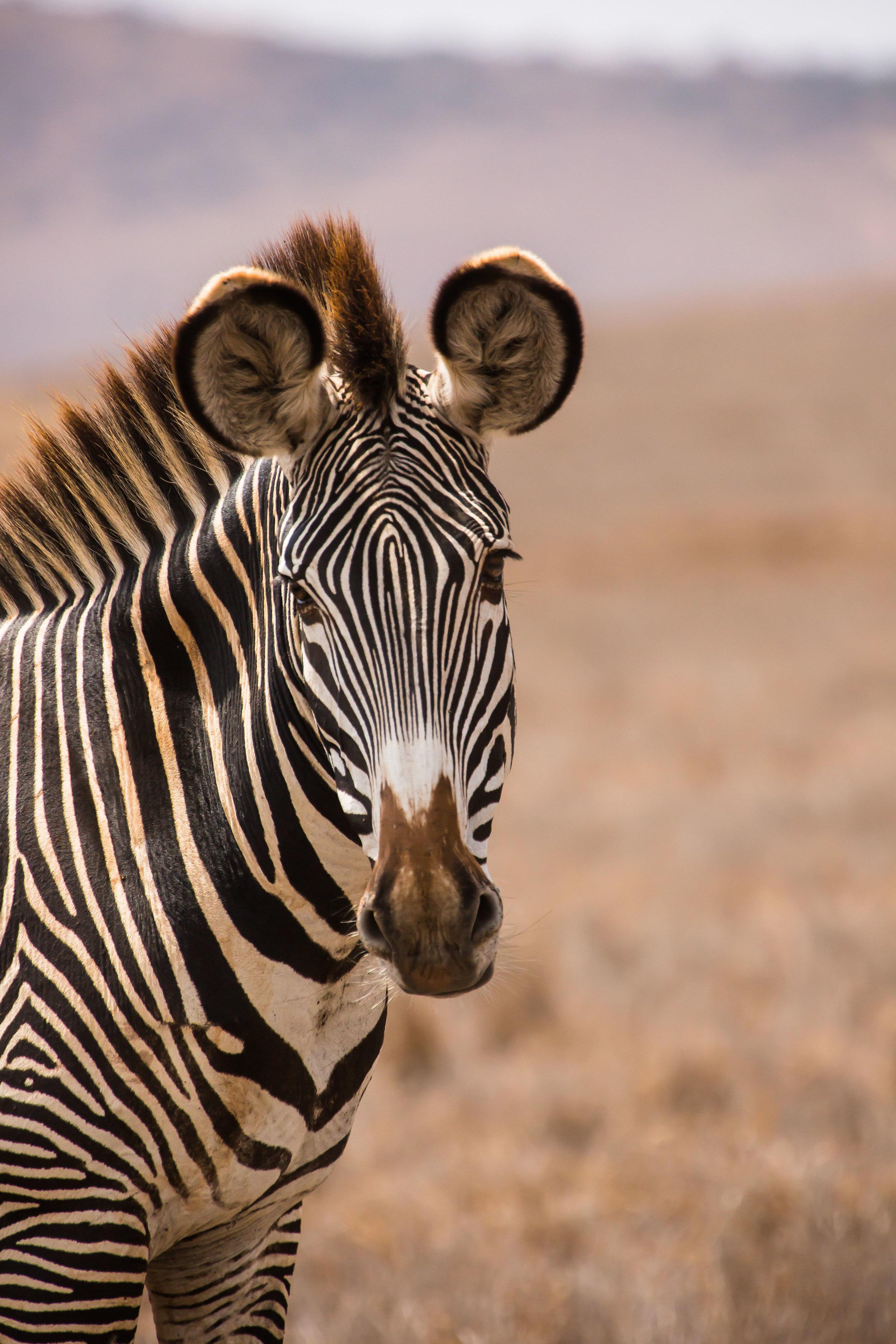 Animals_Website_Maxblakesberg-4.jpg