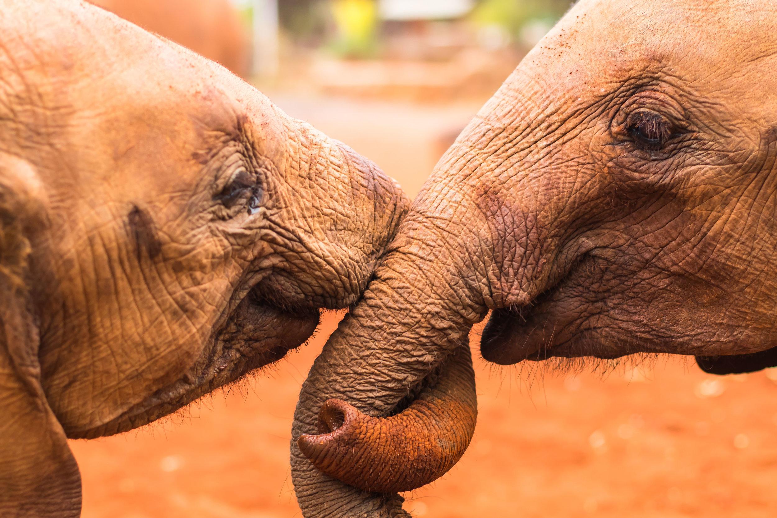 Animals_Website_Maxblakesberg-1.jpg