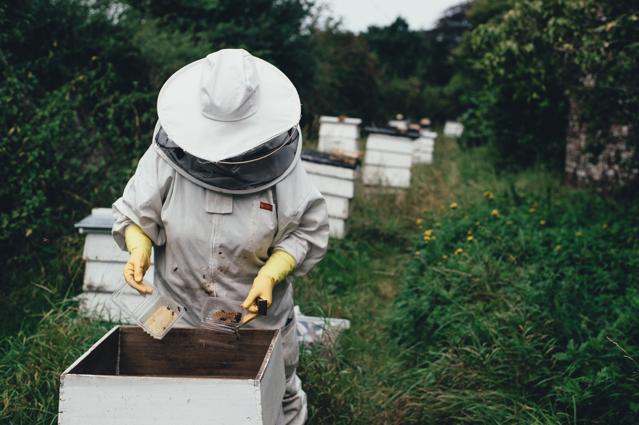 Extracts of Polypore Mushroom Mycelia Reduce Viruses in Honey Bees   Paul E. Stamets  et.al