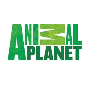 15683396_Animal-Planet-Video-Podcast-Bad-Dog----Snowy-the-Carpet-Destroyer--jpg.jpeg