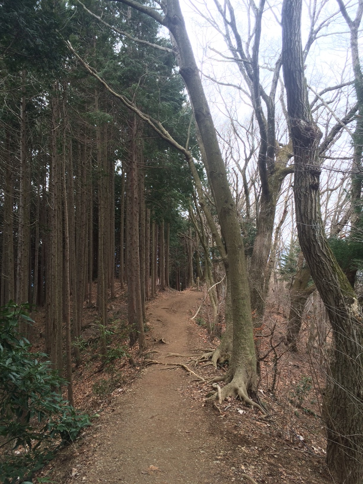 Path way after reaching the peak of Mount Takao