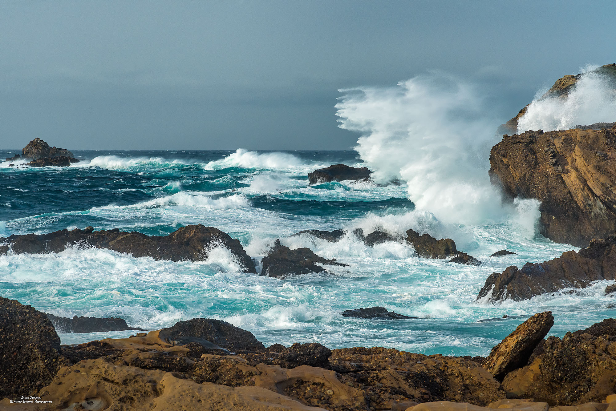 Mighty Point Lobos