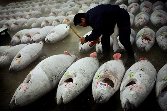 Tsukiji fisk marknad. Tokyo, Japan.