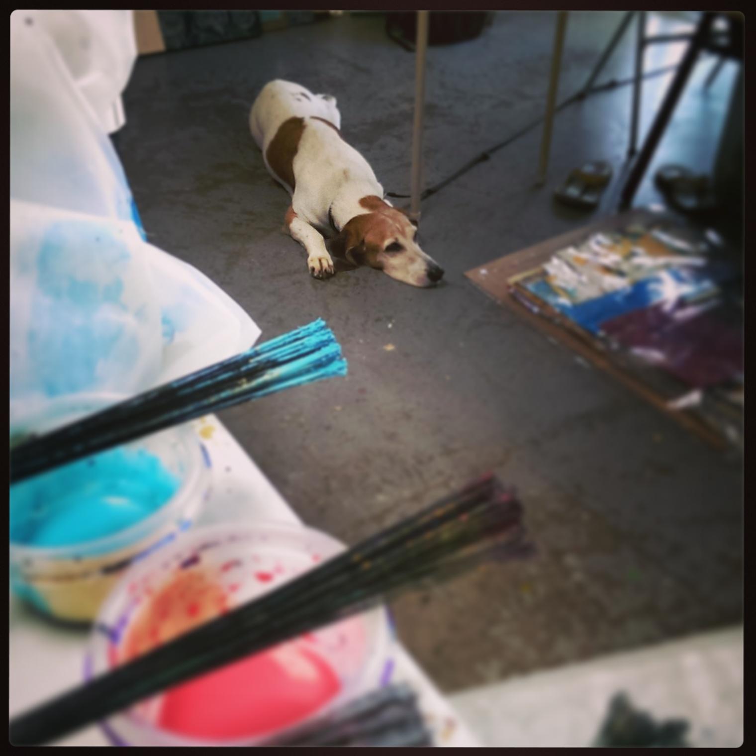 Studio dog, Henri.