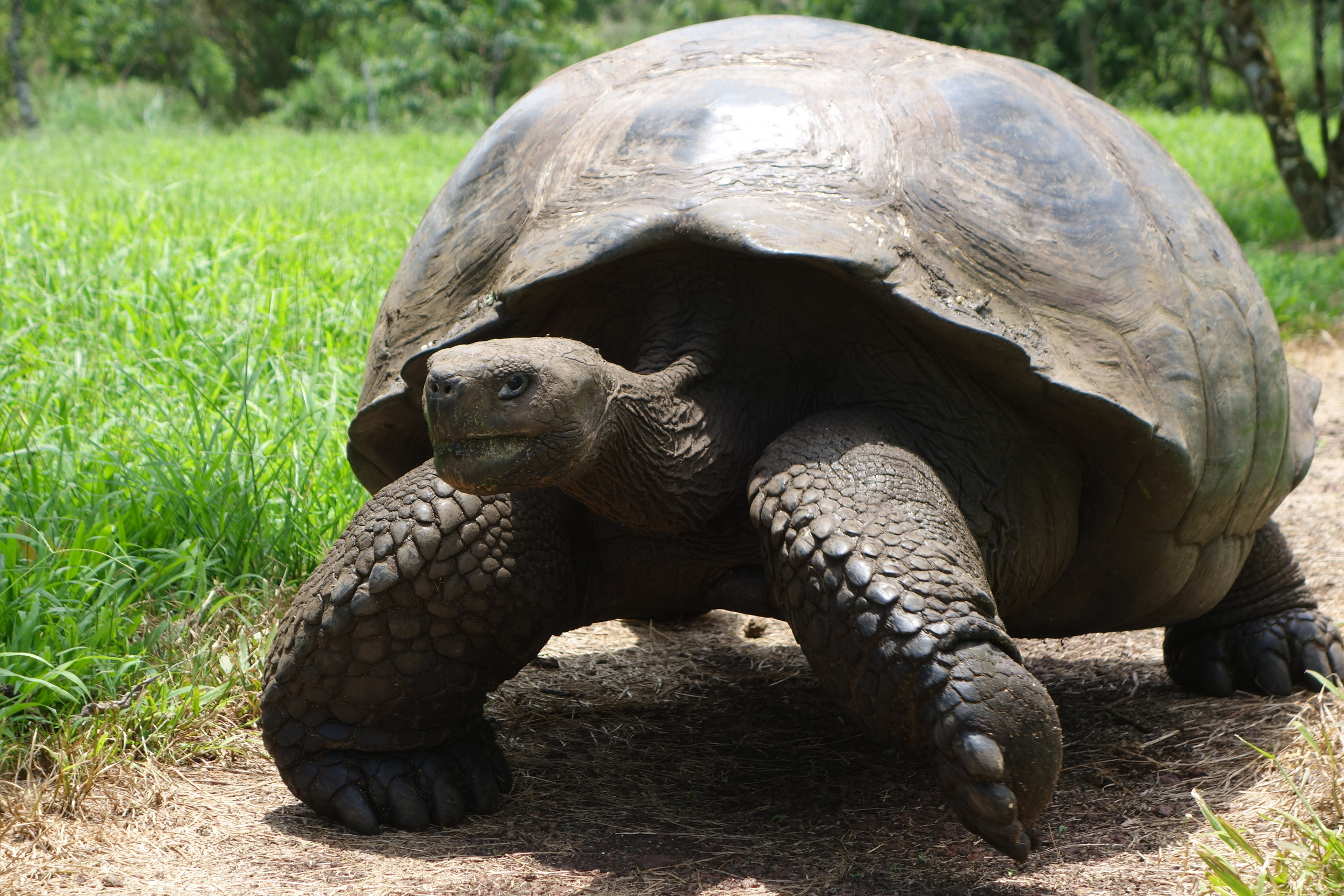 ride andes horse treks galapagos tortuga tortoise