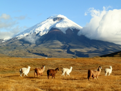 CA+day+4,+llamas+&+Cotopaxi+sunset,+Ride+Andes.JPG