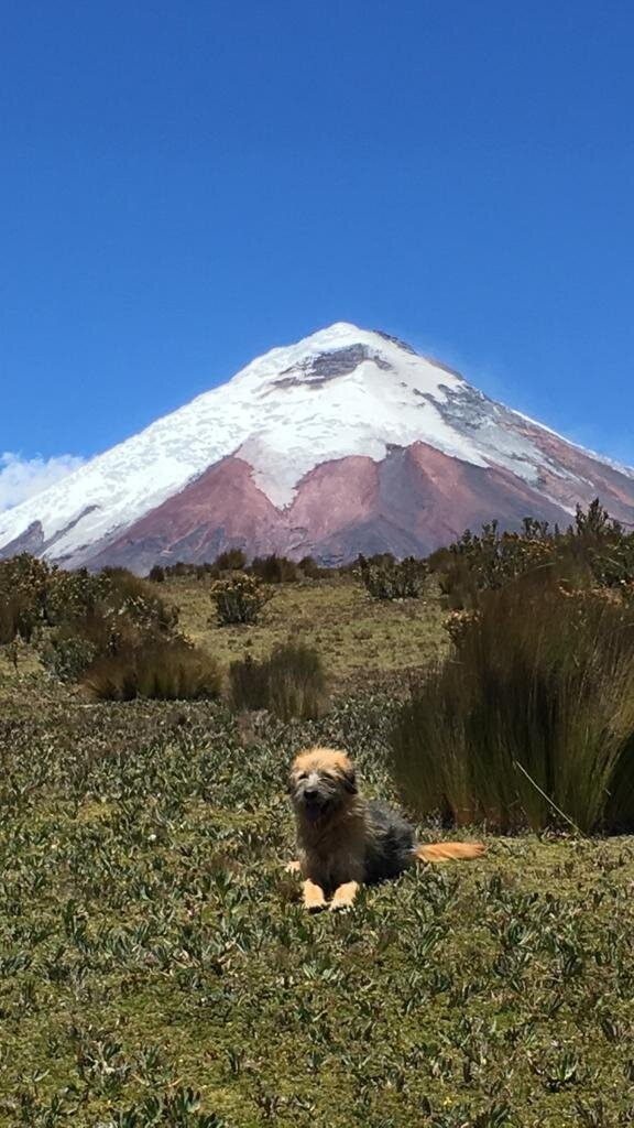 Under the Volcano - Many times during our rides we find abandoned dogs along the way. One of our projects that we are passionate about is to take them in and get them vaccinated and looked after and then find good homes for them. The dog in the picture came along for a day of riding and to our relief, found his owner once we were done for the day!