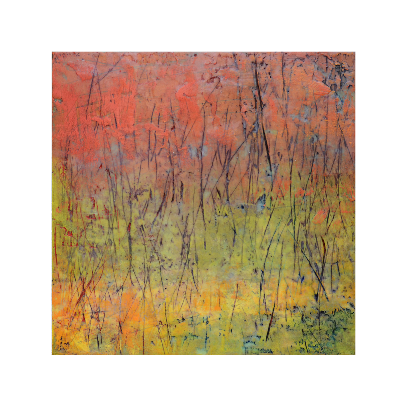 Thicket 1   12 x 12  Encaustic on Panel  $300