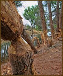 Wildlife damage documentation