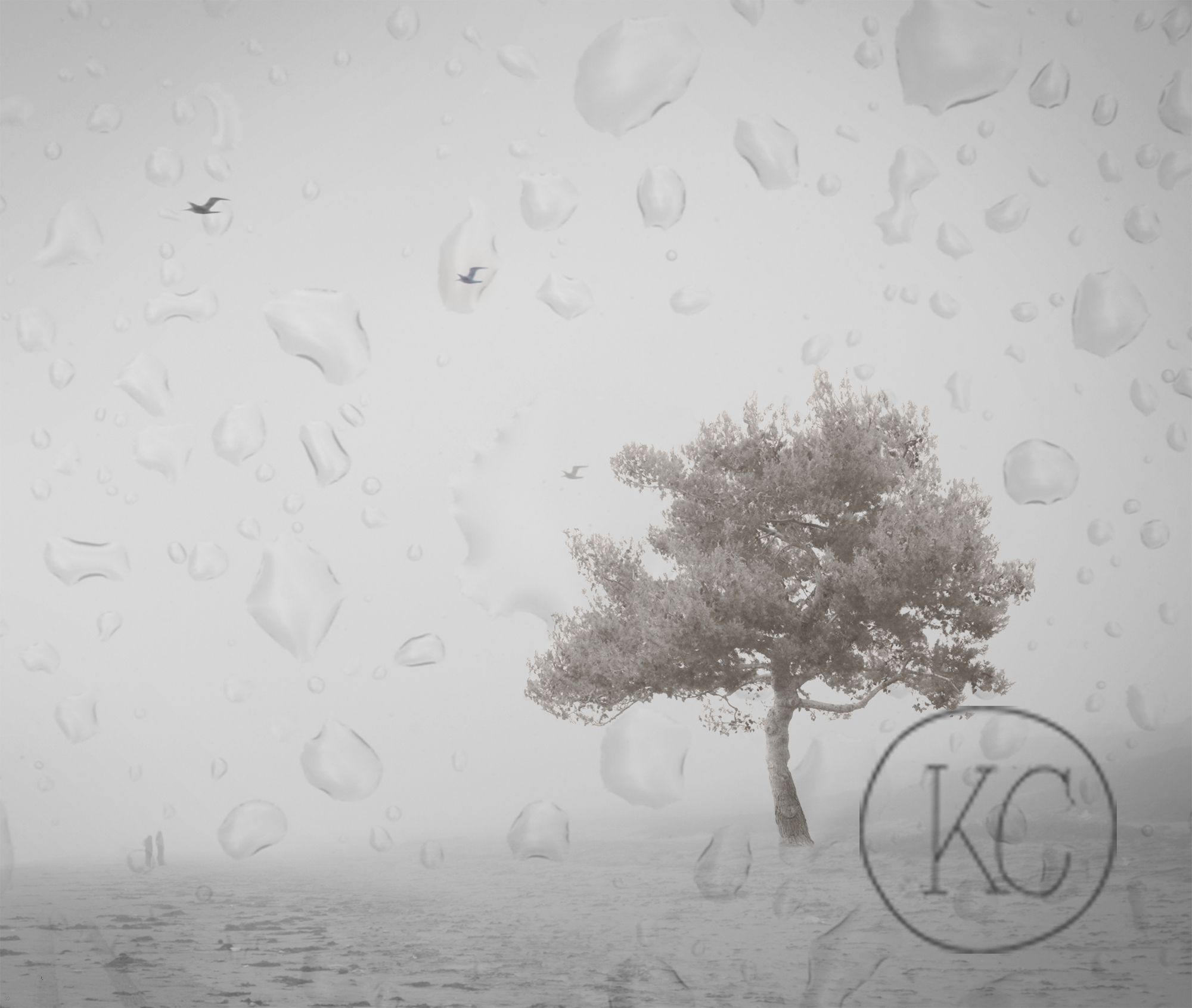 Tree_Raindrops.jpg