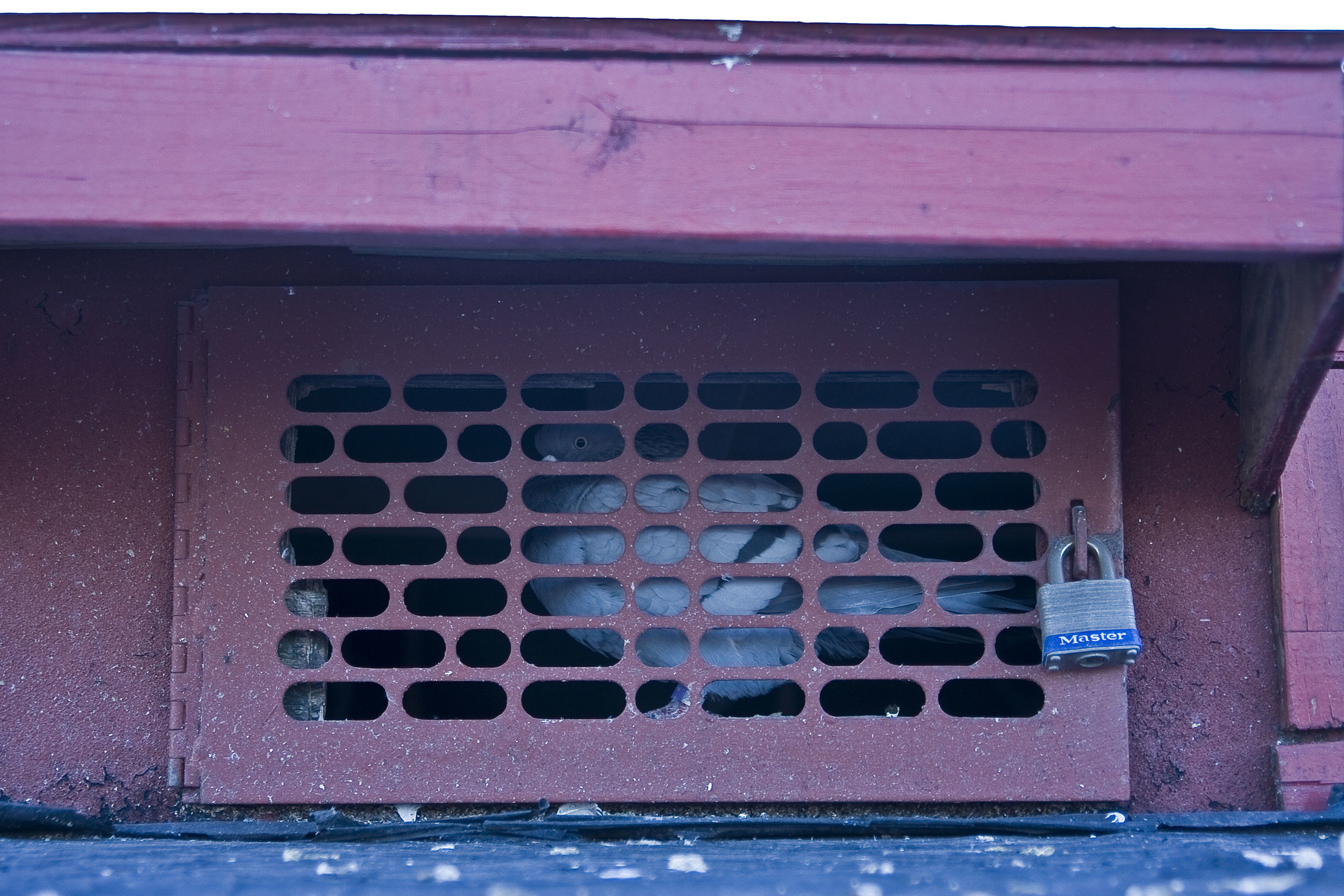 Pigeon Coop, 2012.