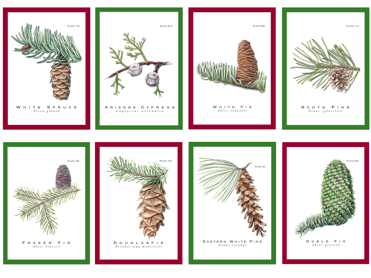 True Nature Christmas Give-A-Tree® Cards