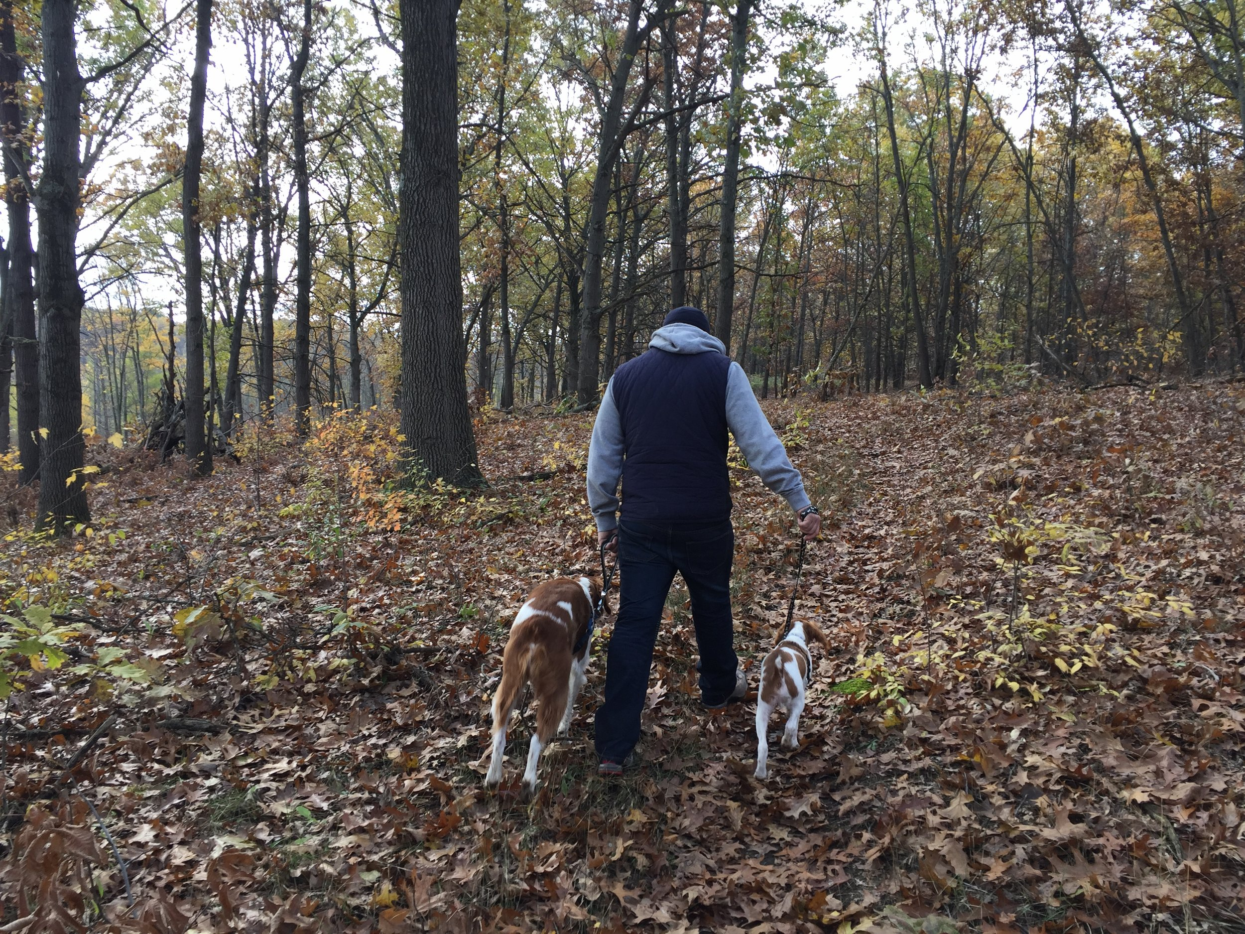 Fall hikes with husband and pups...highly recommended!