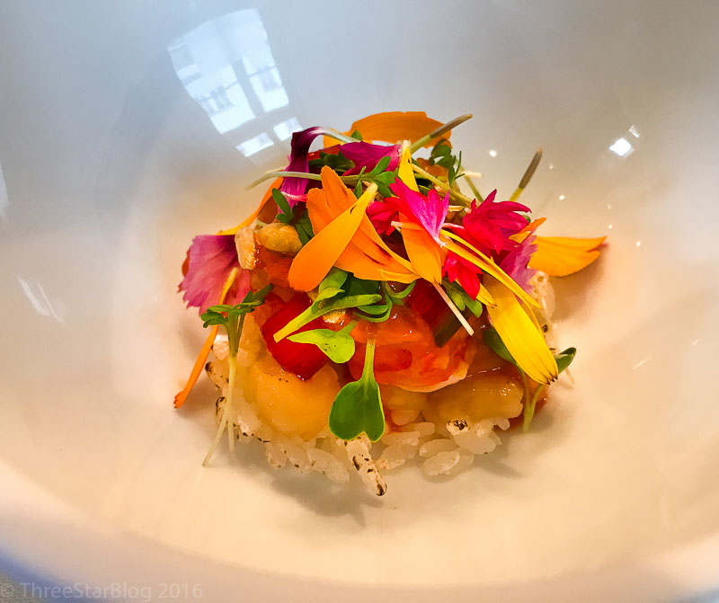 Course 3: Red Gamba + Roots + Fruits + Flowers, 9/10