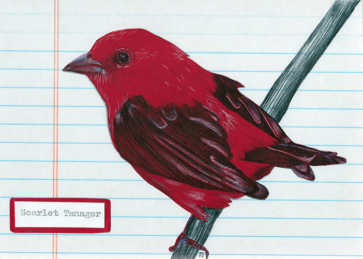 I was never quite satisfied with this initial version of the Scarlet Tanager.