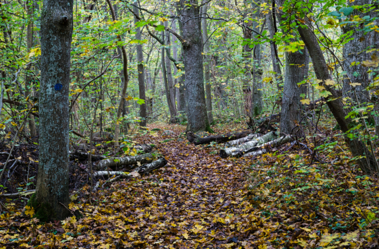 Forest Path in Autuymn.png