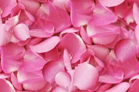 pink rose petals.jpg
