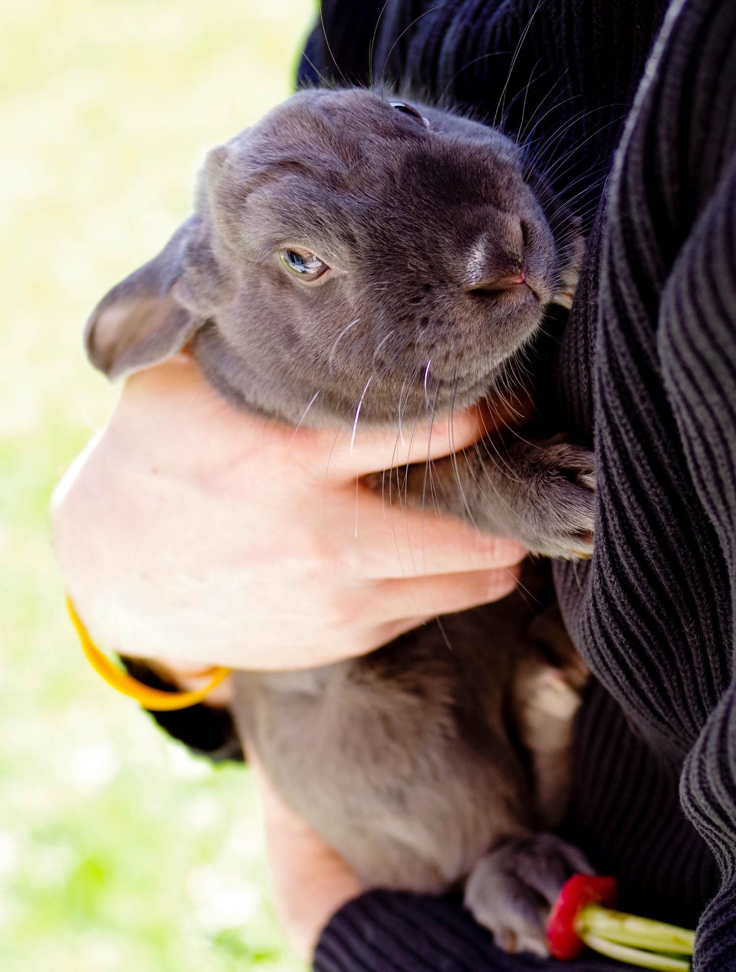 bunny_.jpg