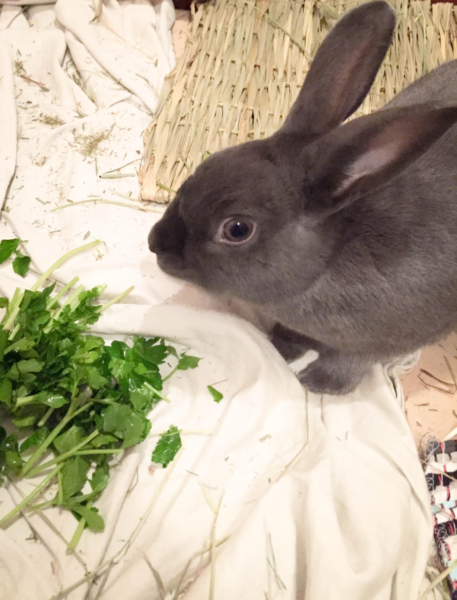 Rey loooves cilantro.