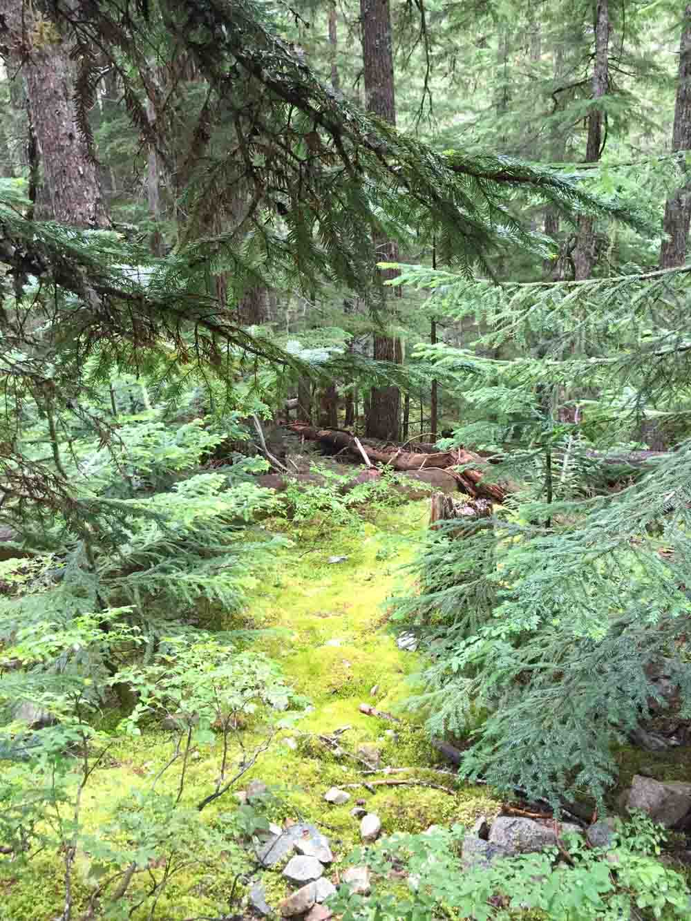 ancient-cedars-trail2.jpg