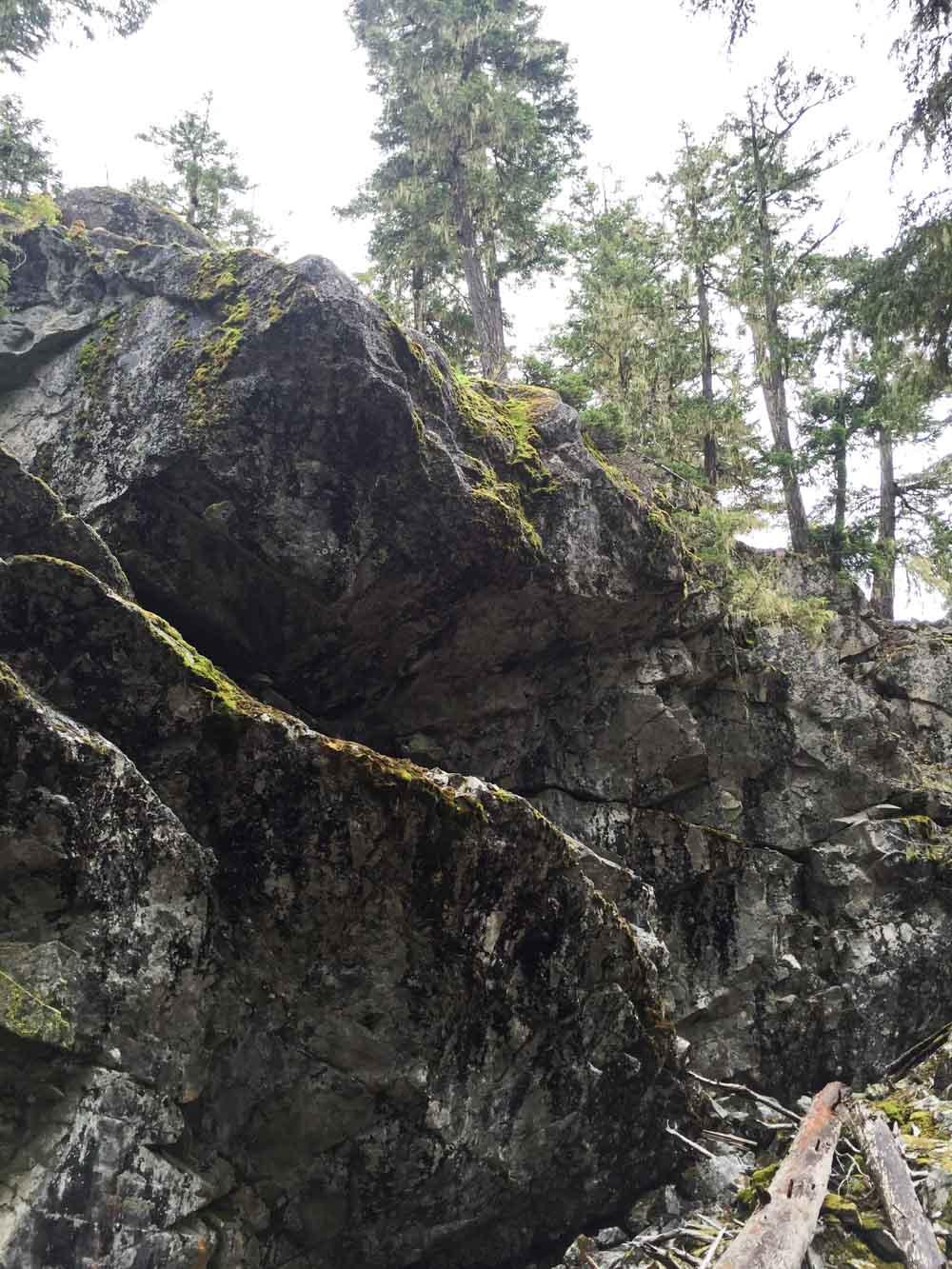 ancient-cedars-trail3.jpg