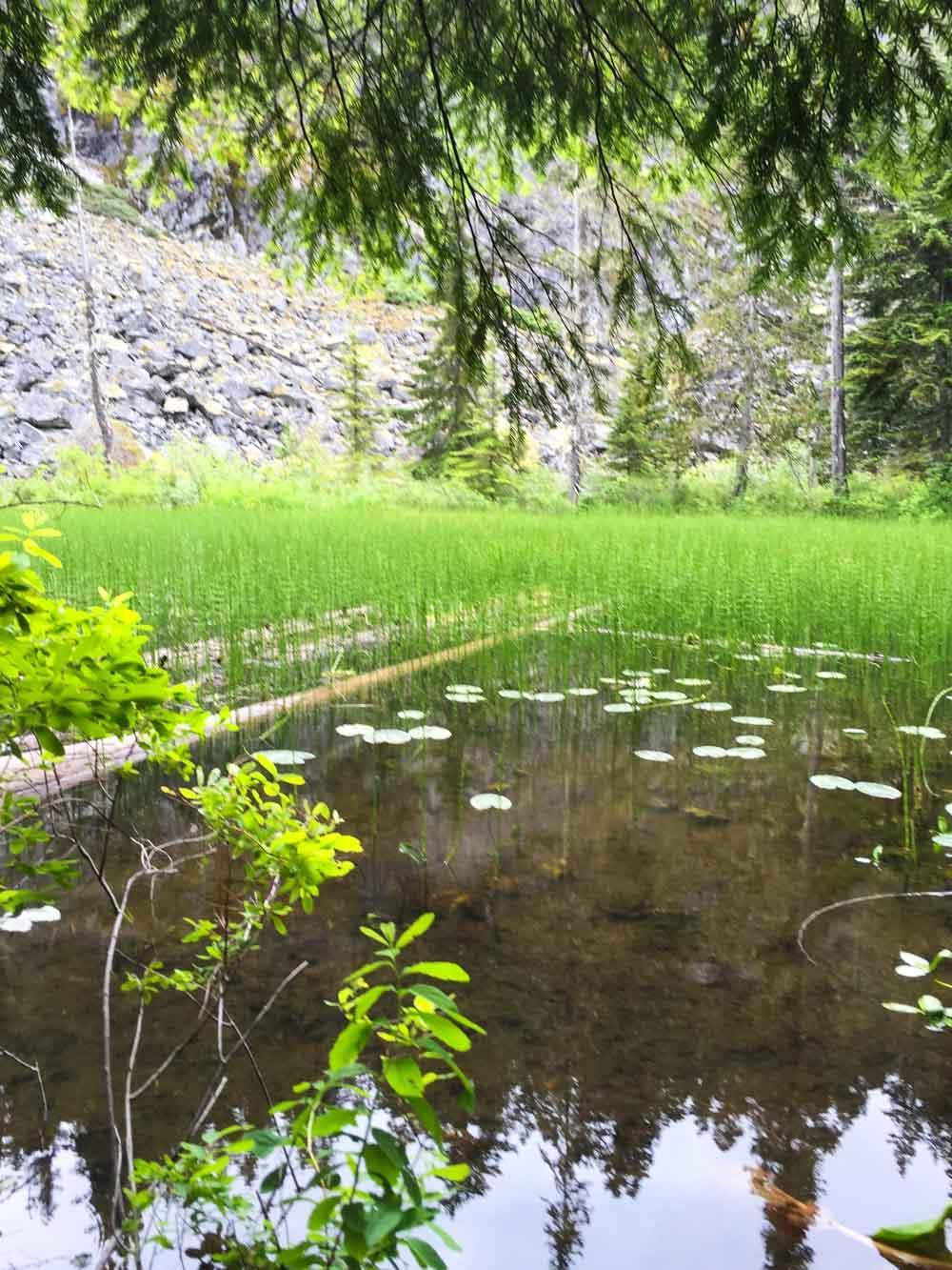 ancient-cedars-trail5.jpg