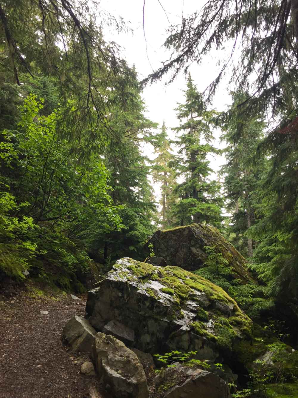 ancient-cedars-trail9.jpg