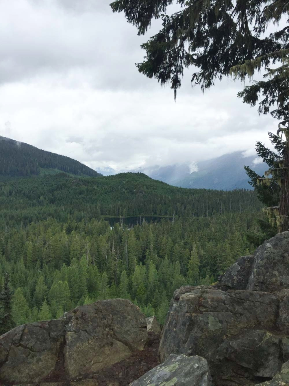 View from the top of Ancient Cedars Trail.