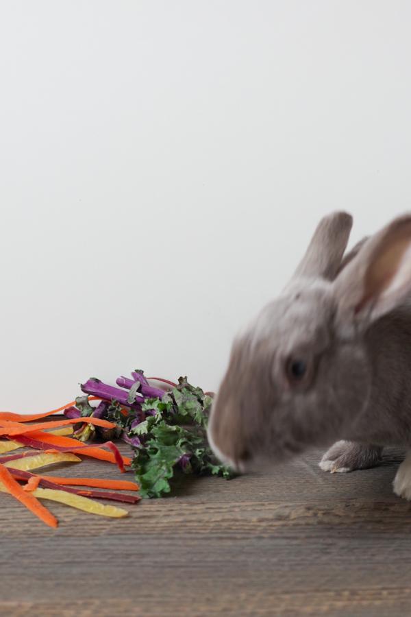 here-comes-bunny.jpg